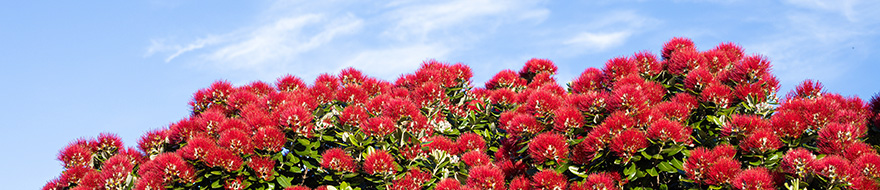 202005 Bequests pohutukawa strip 880px