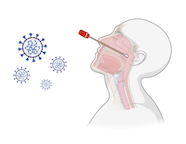 Cartoon of a Covid19 nasopharynx swab and virus particles