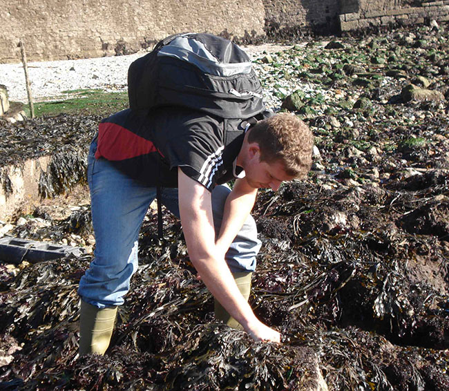 Nathan Kenny collecting seaweed in Plymouth