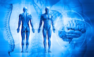 Blue human anatomical figures thumbnail
