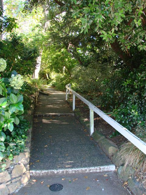 One of the bush paths around Carrington College