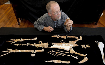 Ewan Fordyce with composite skeleton of the giant Kairuku penguin, Geology Museum, University of Otago.