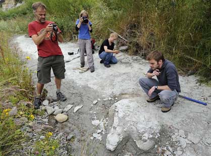 Site of an Early Miocene baleen whale, Otaio River, January 2012. From left to right: Philip Howe (S Canterbury Museum), Julie Brown (Ngai Tahu Rock Art Project), Nichole Moerhuis and Felix Marx (Department of Geology, University of Otago); Felix is close to the whale, with a limb element and part of the left mandible visible just below him.