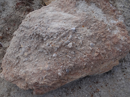 "Boulder of silcrete (""Sarsen stone"", about 0.5 metre across) in which the original quartz pebble framework is still visible on the surface."