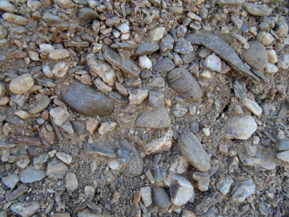 Greywacke-rich gravel (largest cobble = 10 cm long), with minor schist, and scattered rounded quartz pebbles (white), in gold workings on the slopes of Tucker Hill, near Alexandra. This gravel has been formed during downslope erosion of an uplifted Manuherikia River channel, the remnant of 20 million year old gravels in the previous photograph, and some underlying schist bedrock. Gold from all three of these sources accumulated in channel bottoms, and was the target of the historic mining.