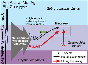 Cartoon showing mobility of metals in the Otago Schist during metamorphism. Metals were released from pyrite as that pyrite was transformed to pyrrhotite under low grade metamorphic conditions (250-400°C). Gold and arsenic were concentrated in gold deposits such as at Macraes mine. Tungsten (W) enrichment at Macraes was derived from elsewhere in the schist pile, not from low grade pyrite. Minor amounts of molybdenum also became concentrated at Macraes mine, but most Mo dispersed. The following photograph shows localized metamorphic concentration of molybdenum associated with igneous rocks, not gold deposits.