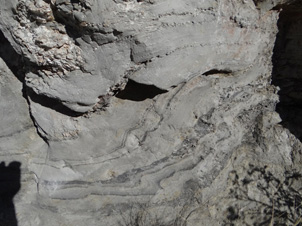 Clay-altered schist outcrop (1.5 metres high) immediately beneath gold-bearing Miocene quartz gravels at Pennyweight Hill alluvial gold mine. The swirly grey and black layers (lower half) are remnants of foliated and folded bedding in the schist. Paler materials in top half are metamorphic quartz veins.