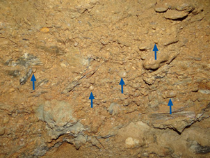 Gold-bearing gravel in an underground mine at Patearoa. This horizon is about 1 m thick and contains the characteristic rounded quartz pebbles (~1 cm, blue arrows) that indicate derivation from older gold-bearing quartz gravels.