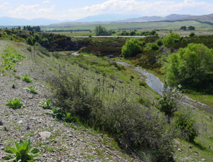 Ida Burn upstream of Oturehua is cutting through a schist gorge after being diverted 90° by tectonic uplift (as in photo above). Rail trail cutting is in left foreground.