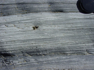 Outcrop of semi-schist. Thin (sub-mm) bands of quartz are tightly spaced throughout the rock.