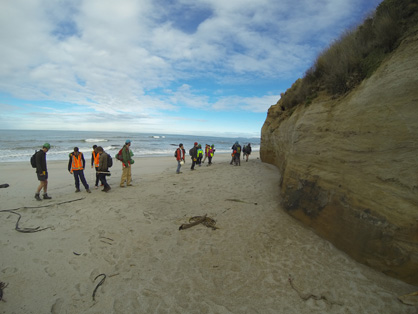 GEOL 273/373 students examining an outcrop along the south Otago coastline near the mouth of the Clutha River. Students collect field data from a late Cretaceous-Eocene terrestrial and marine sedimentary sequence to develop a stratigraphic history of the region.