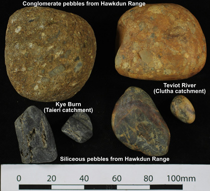 Distinctive pebbles derived from the greywacke bedrock of the Hawkdun Range on the north side of the Maniototo basin.