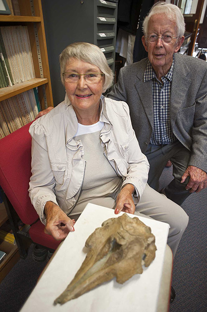 Jill and David Brathwaite examine the specimen of Papahu taitapu in March 2015. In 1987, Mr and Mrs Brathwaite found this fossil dolphin and reported it to Ewan Fordyce, but did not leave a note of their names. It is very good to be able to acknowledge their role as discoverers.