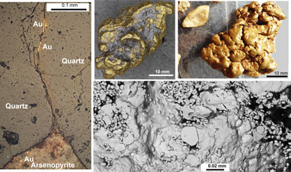 Images of gold from the lower slopes of Old Man Range, central Otago. On left, some small seams of gold have migrated up a crack in a quartz vein from an oxidised arsenopyrite grain at bottom (from Sam Stephens). At top are nuggets (from Mark Hesson) formed from chemical accumulation of gold during long-term oxidation of the schist basement and associated quartz pebble deposits. Rounding of the nuggets has been caused by local recycling during tectonic uplift. Bottom right is a scanning electron microscope image (from Gemma Kerr) of the surface of a gold nugget, showing additions of gold plates and irregular forms that may have been deposited by bacterial action.