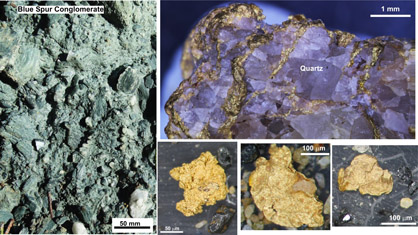 Blue Spur Conglomerate and some examples of alluvial gold from the conglomerate.