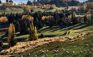New Zealand farm scenic landscape thumbnail