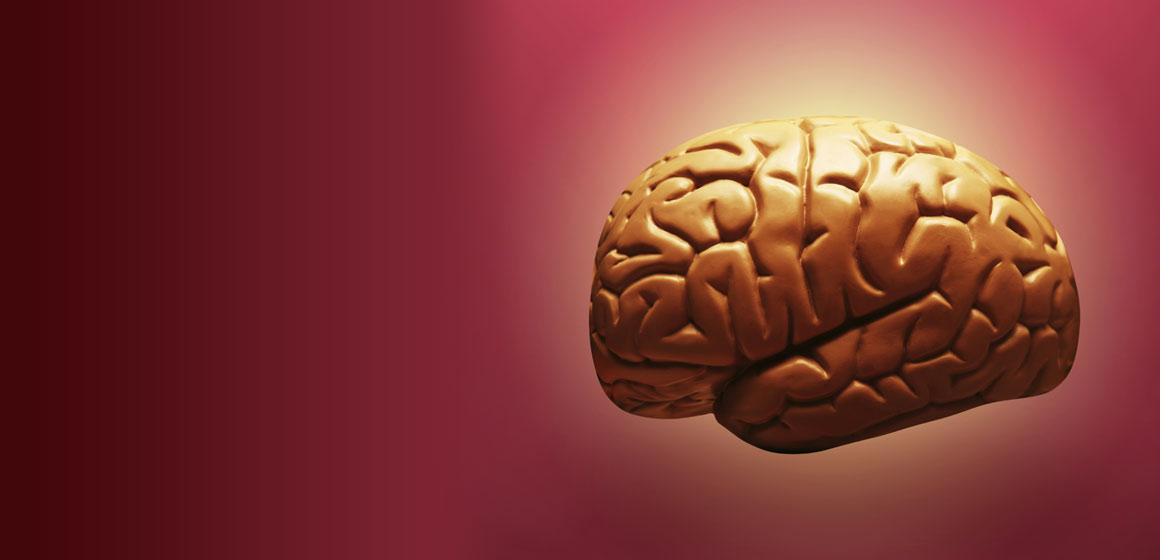 Brain Health, 2014, He Kitenga, University of Otago, New Zealand