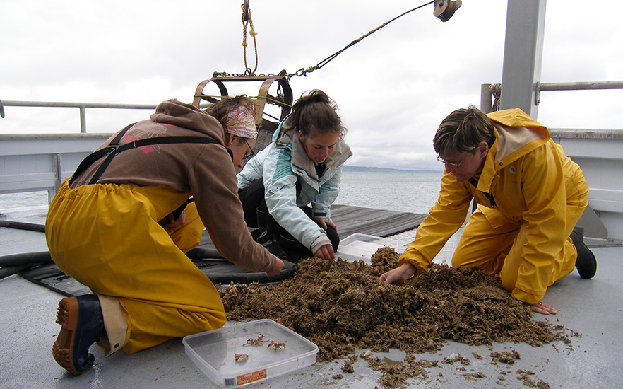 University of Otago Marine Science Staff on a boat sorting through seaweed 1x image
