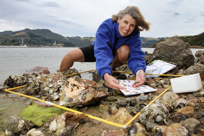 sally carsons demonstrates a marine metre squared on a rocky shore