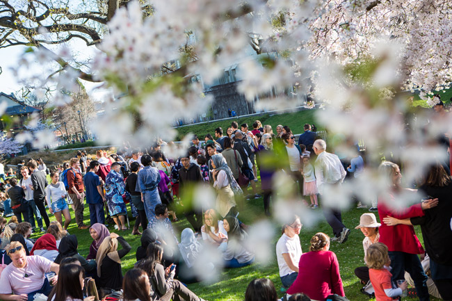 hanami-2018-crowd-through-cherries-image