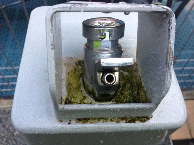 drinking  fountains with algae