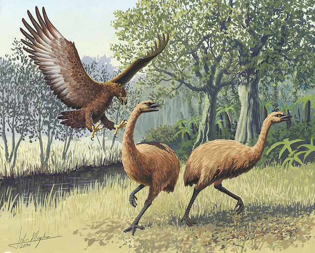 Giant Haasts eagle attacking New Zealand moa image