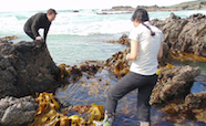 Sampling kelp thumb