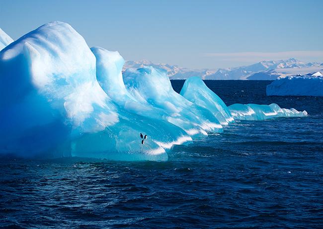 Adelies on iceberg image