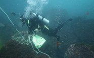 A diver collecting samples near a volcanic vent thumbnail