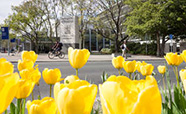 Spring flowers outside the University of Otago entrance sign thumbnail