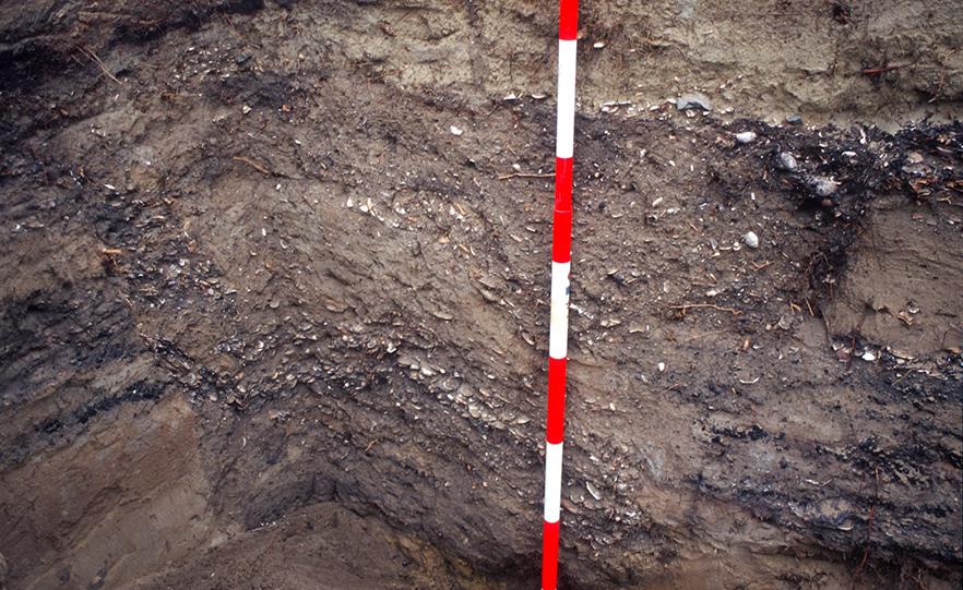 The kūmara pits with discarded bone, shellfish and charcoal image