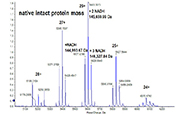 Protein Characterisation