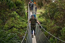 A picutre of a student walking across swing bridge in a native forest on a Unipol Outdoor Adventure