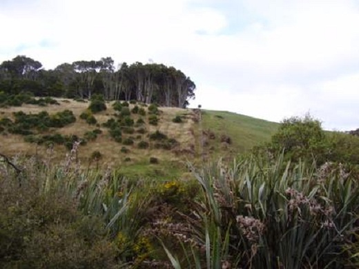 The Maori freehold land and general land divide