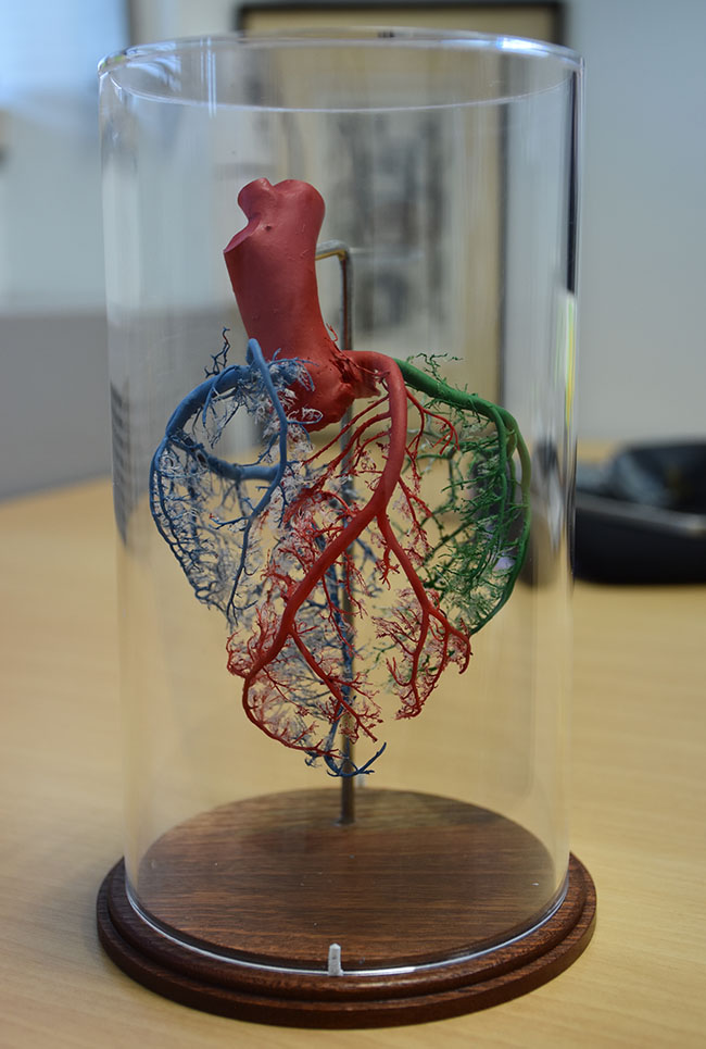 Model of Heart (from Christchurch Heart Institute in 2017)
