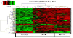 Heat map of mRNA expression in endometrial lumenal, glandular and stromal cells