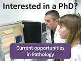 button - Pathology PhD Opportunites 2