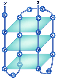 G-quadruplex in DNA