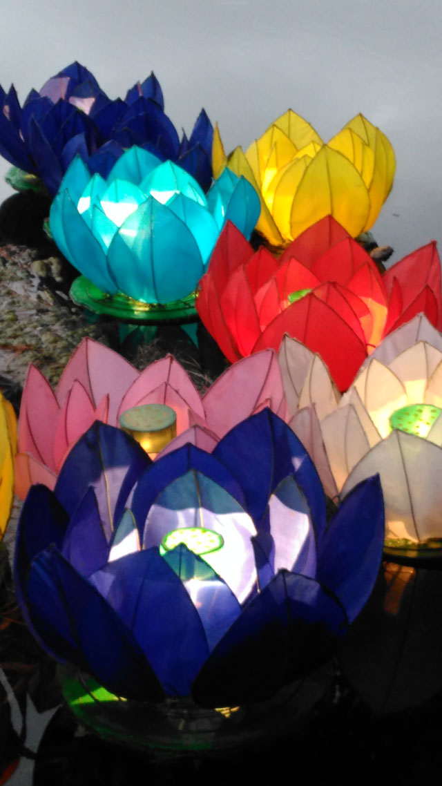 Water lilly lanterns at the Christchurch Lantern Festival (2016)