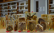Samples in the Stewart Pathology Museum_thumbnail