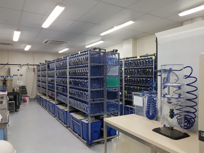 zebrafish facility general