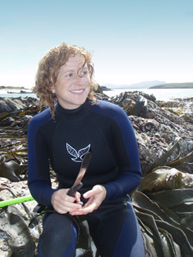 Collecting kelp and marine invertebrates from the Falkland Islands