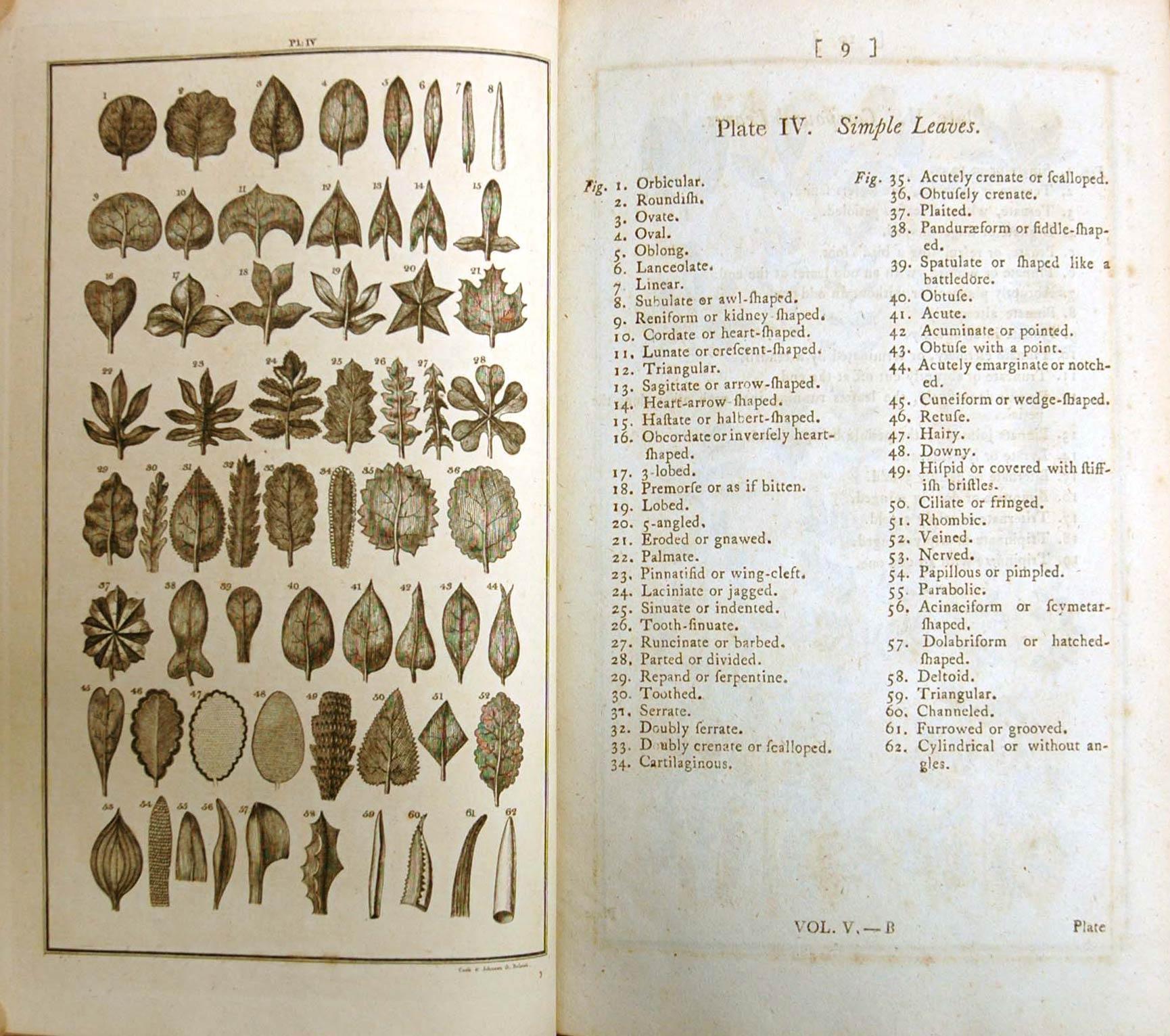 Cabinet 07 - Systema Naturae, Linnaeus, Prince of ...